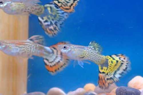 kalat ja neitsyt lumilaudat halvalla